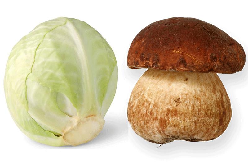Chou blanc aux cèpes - Les recettes de Cuisine Facile du ...